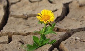 Sunflower Positive Trust in God